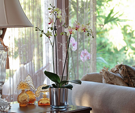 SPECIAL RECOMMENDATIONS FOR ORCHID (PHALAENOPSIS) CARE FROM THE GROWER